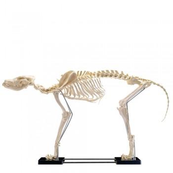 Model szkielet dużego psa -...