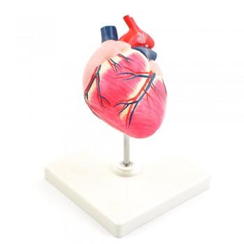 Model serce psa -...
