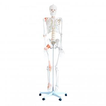 Szkielet ludzki naturalnej...