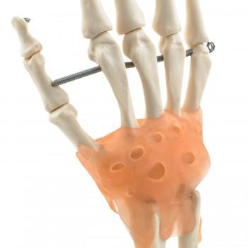 Model dłoni HeineScientific